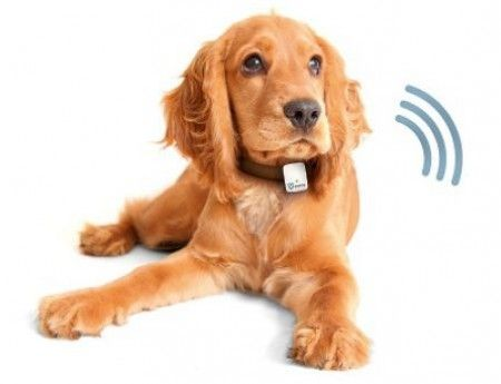 Hundeortung mit Tractive GPS